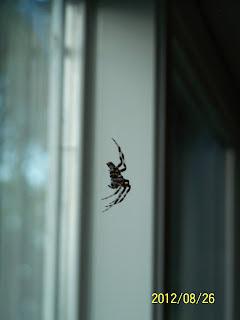 Porch Spider @ Haus of Rhi