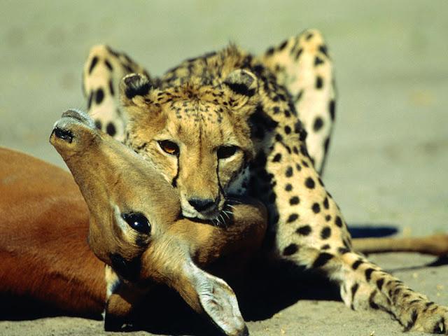 imagenes de animales terrestres - Gifs animados de Animales terrestres, animaciones de