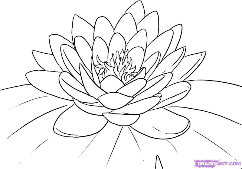 easy lily coloring pages - photo #22