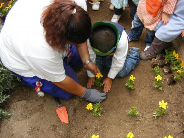 Cuidados para la naturaleza - Como cuidar las plantas de exterior ...
