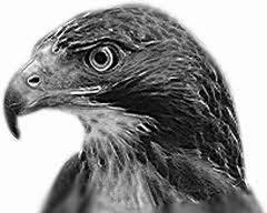 poema del falcó immòbil