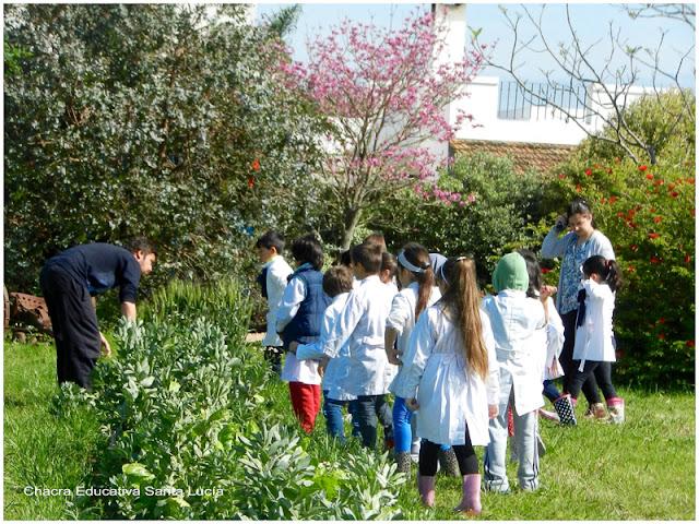 Grupo de alumnos listos para recolectar la cosecha - Chacra Educativa Santa Lucía