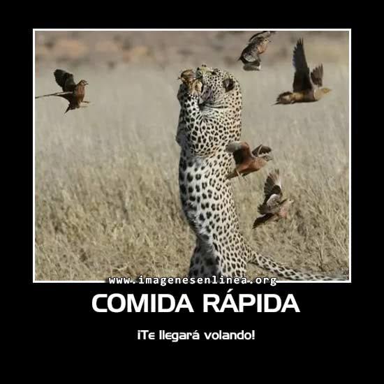 Comida rápida, ¡te llegará volando!, Imagen de Tigre comiendo aves.