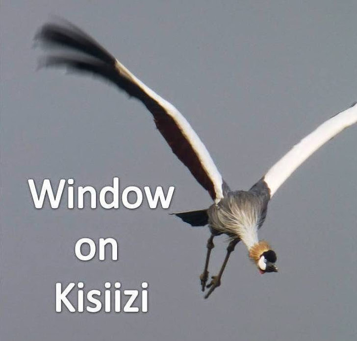 Window on Kisiizi