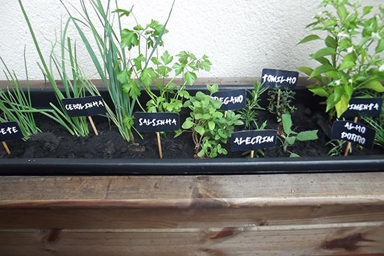 horta em casa, horta na varanda, horta, flores, temperos, garden