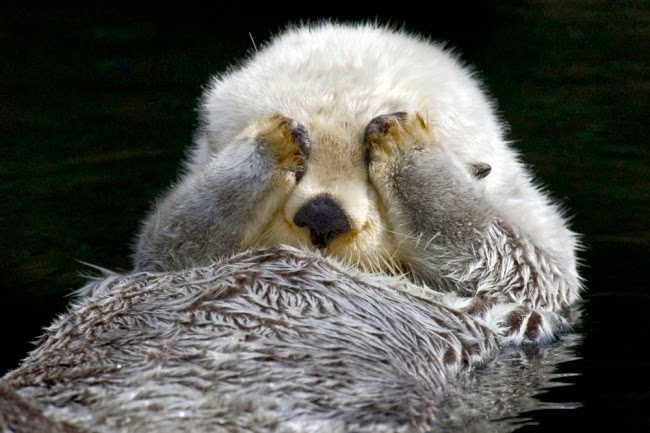Otterly adorable!  These Cute  Otters  Will Make Your Heart Smile (Photos - Videos)