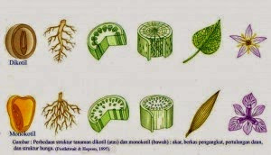 Materi Klasifikasi Tumbuhan Monokotil Dan Dikotil