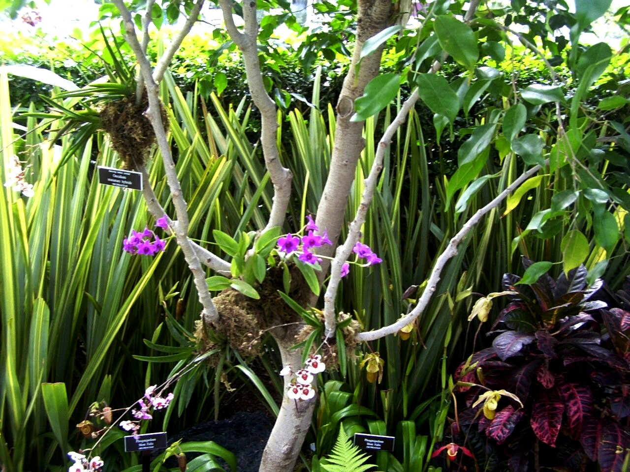 epiphytic orchids and trees relationship counseling