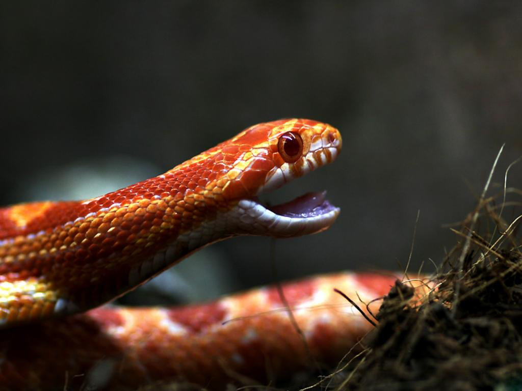 Our Beautiful World Beautiful Red Snakes