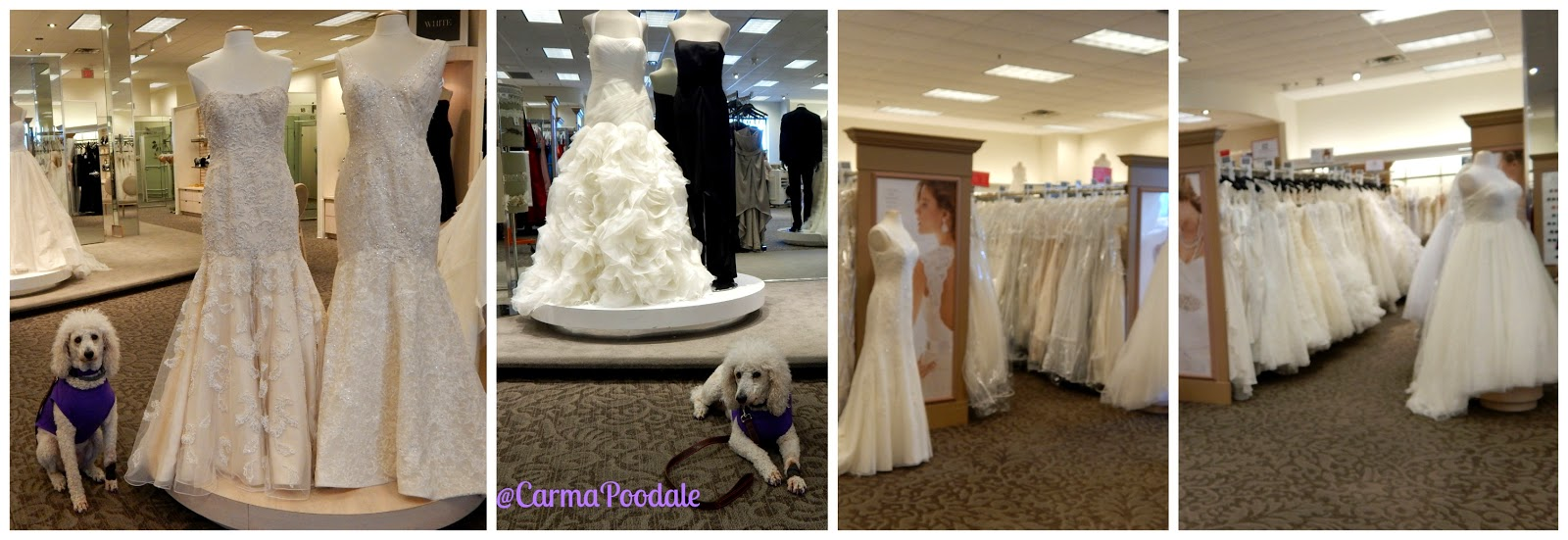 Carma by the wedding gowns