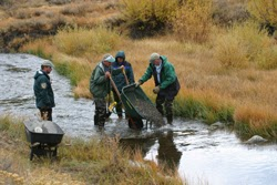 Volunteers needed for Truckee River Day