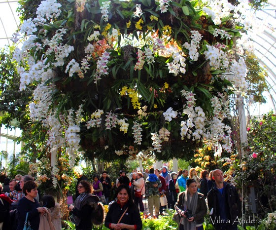 Big cluster of orchids arranged as a chandelier at the NYC Botanical Gardens