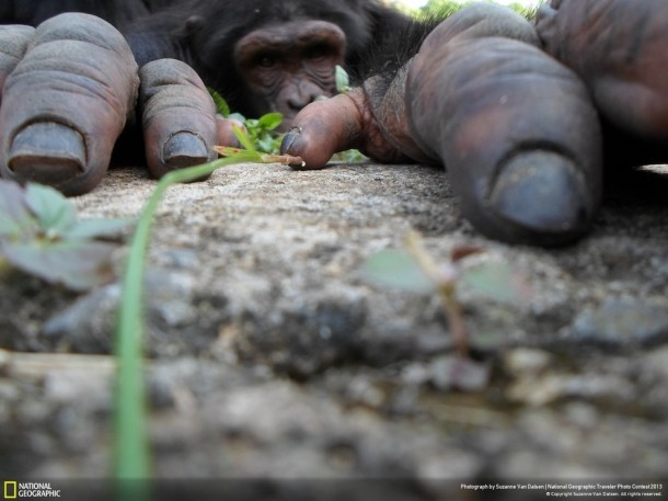 Best Pictures by National Geographic