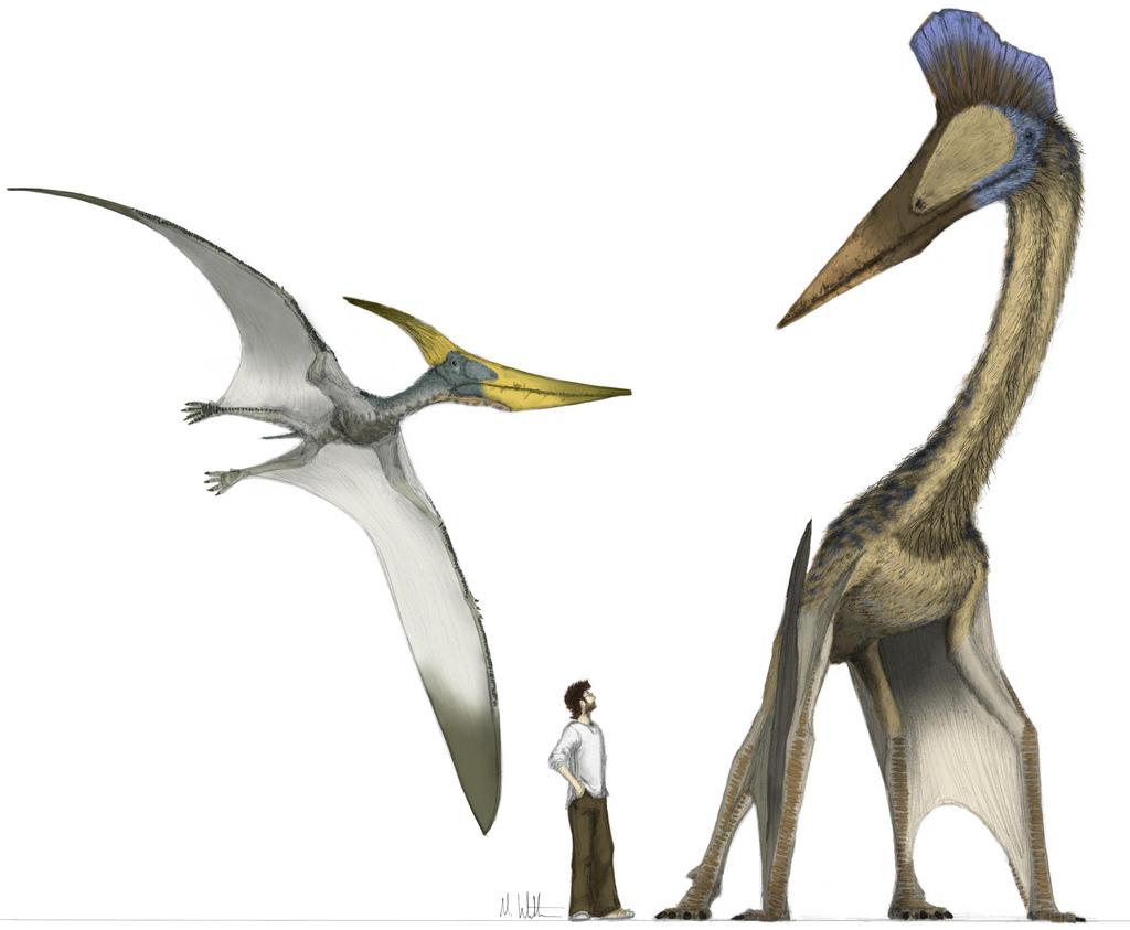 Pterosaur.net Blog