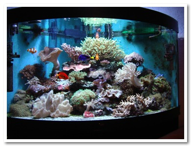 Acquario idea preparazione acquario - Pesci e acquario a letto ...