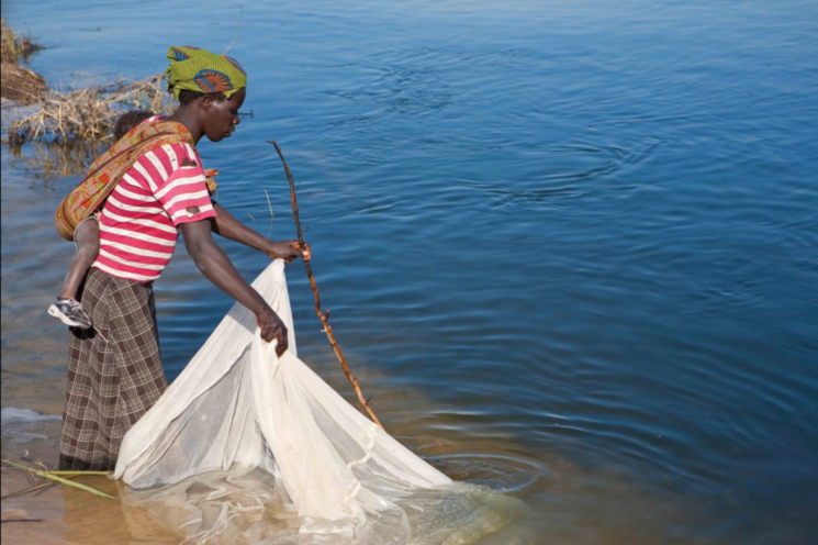 http://www.nytimes.com/2015/01/25/world/africa/mosquito-nets-for-malaria-spawn-new-epidemic-overfishing.html?_r=2