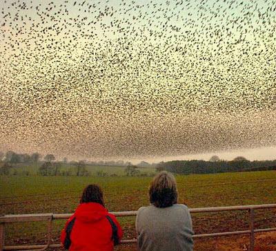 burung yang banyak