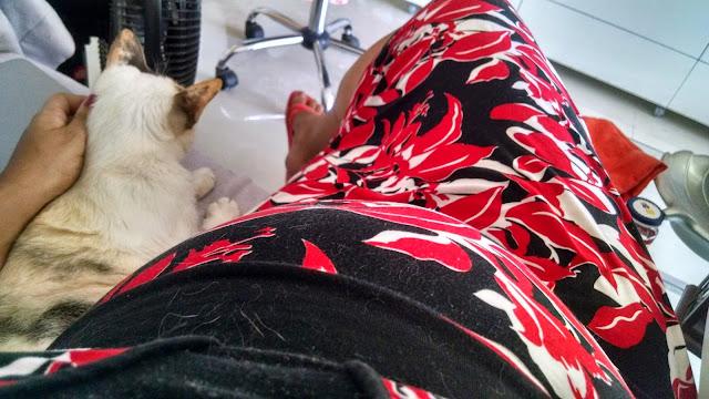 Gata Lili ao lado da barriga de Renata Costa, com gravidez de seis meses