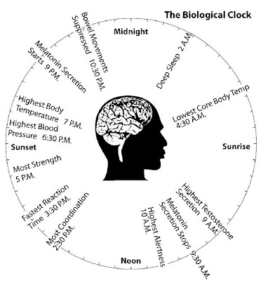 an overview of the circadian rhythms and the biological clock concept in medical doctrine Circadian rhythms may be the most difficult concept to understand in the world of sleep medicine there is a lot of confusing language and it relies on science that is not easily approached.