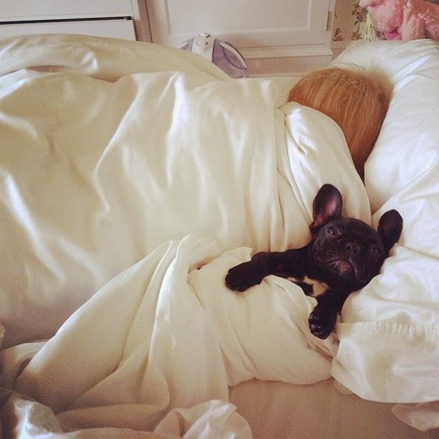 Lady Gaga en la cama con mascota que parece ser su pareja
