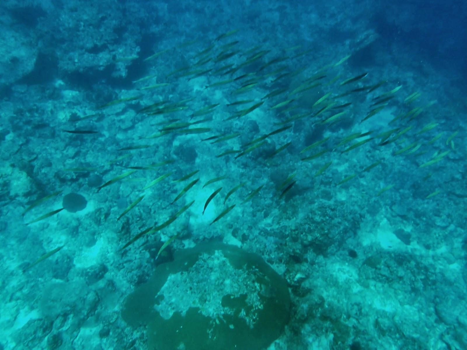 Snorkeling in Maya Bay Thailand