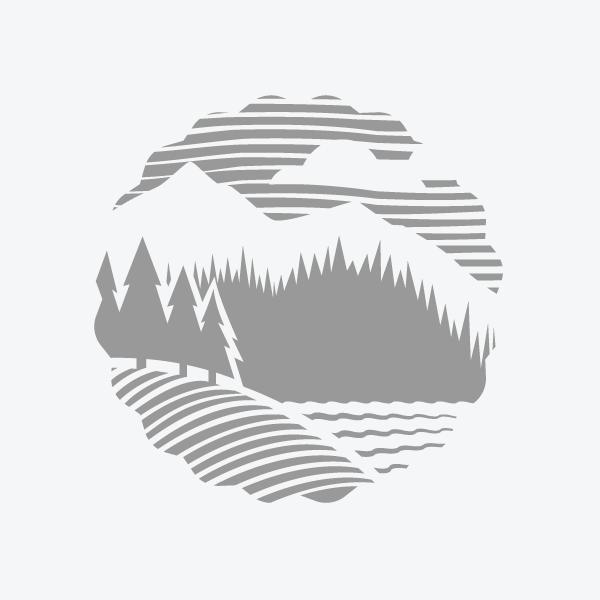 christopher leduc design � illustration forest logo