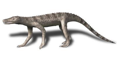 reptiles primitivos del jurasico Dibothrosuchus