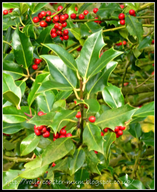 holly berries for Christmas
