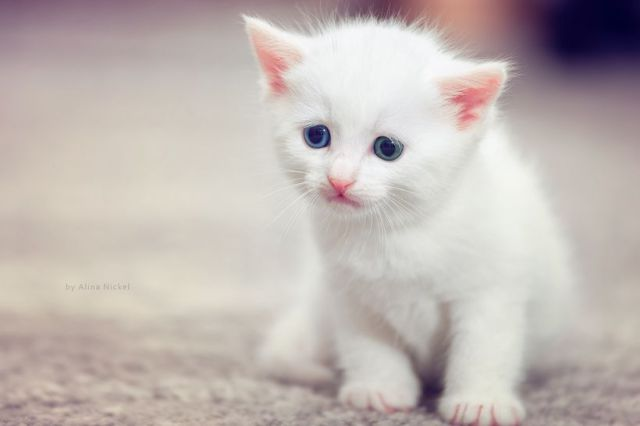 Cute pictures animals babies kittens puppies Daily Cuteness