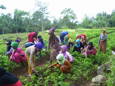 Image result for pembangunan masyarakat desa