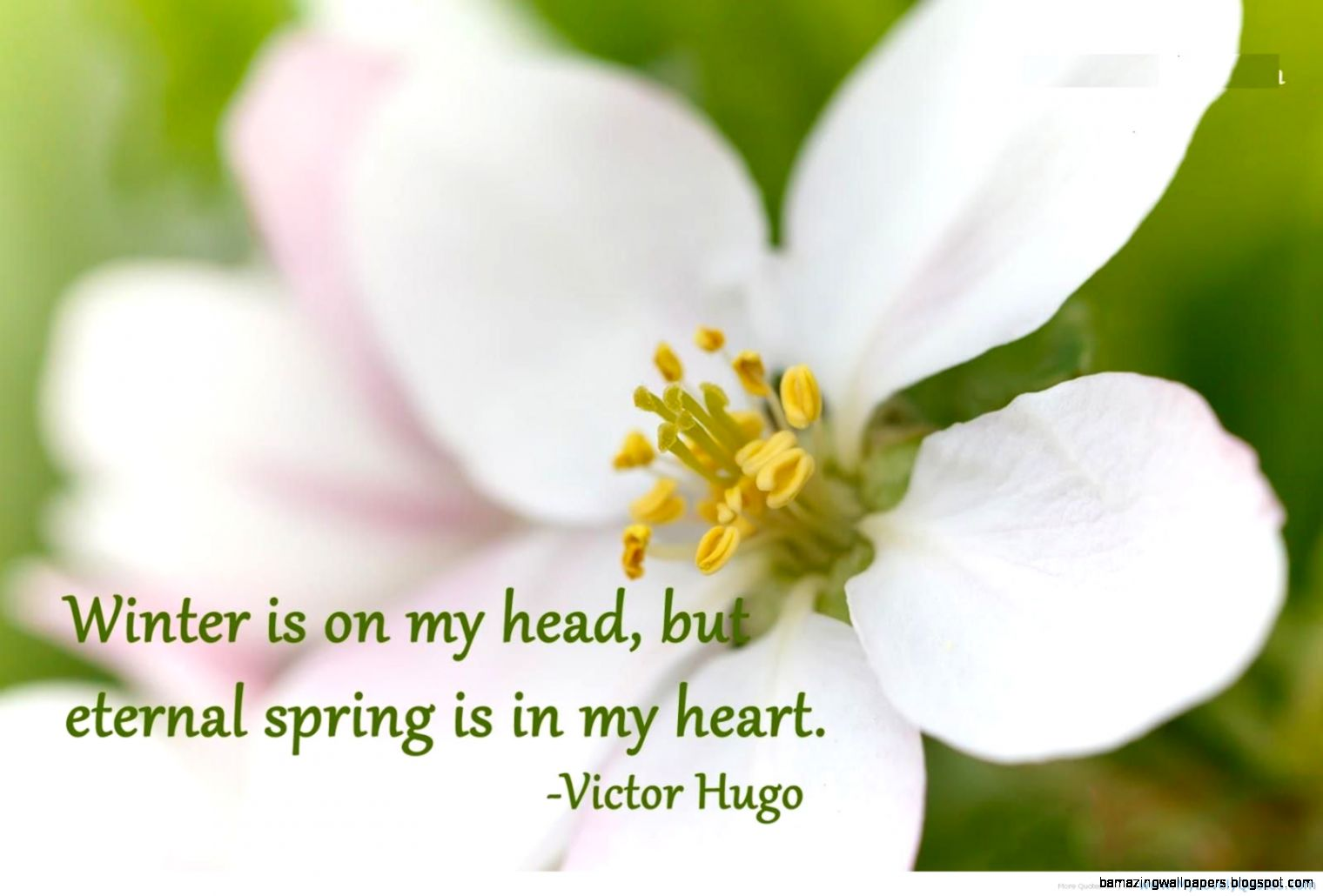 Spring Sayings Quotes