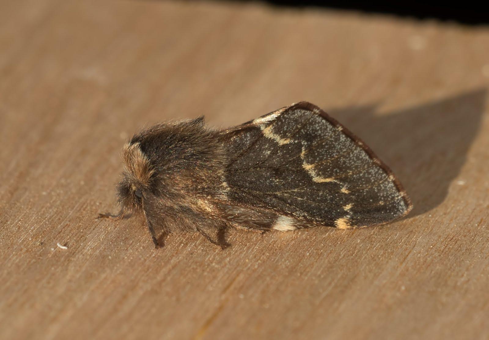 kent moth group