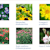 summer flowering plants