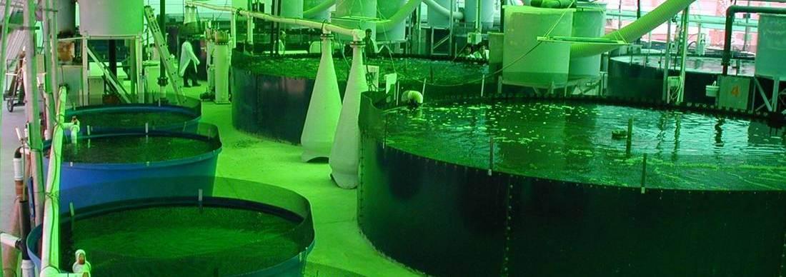 Asesor a trucha y tilapia geomembrana para piscicultura y Estanques para piscicultura