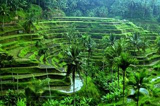 Ubud bali, indonesian