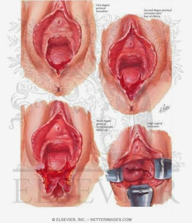 7 Type Vagina Menurut Arabic Kamasutra