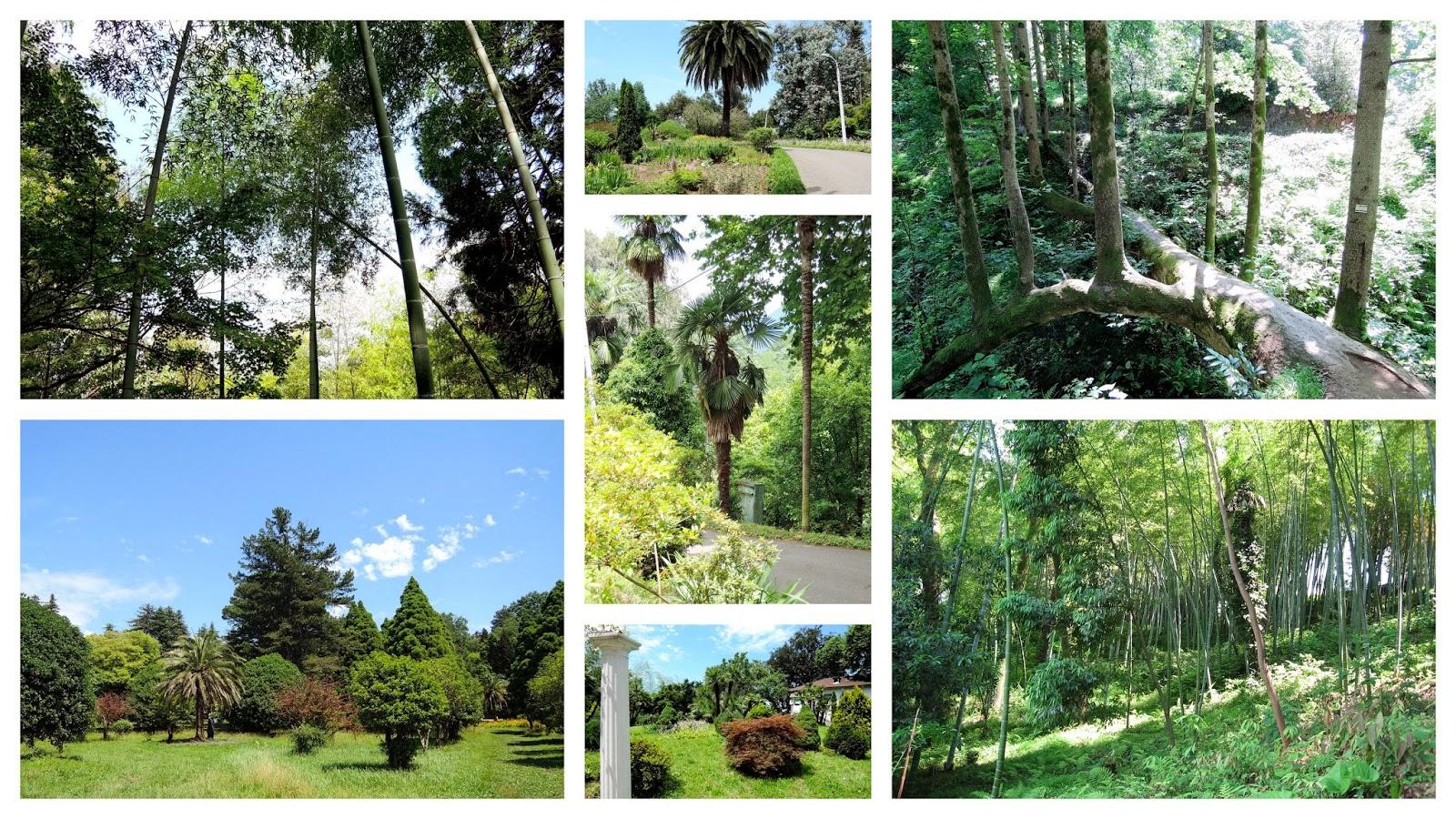 растения ботанического сада в Батуми