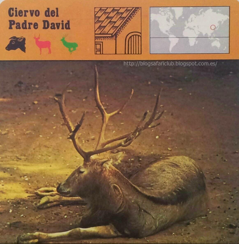 Blog Safari Club, el Ciervo del Padre David, no existe en la naturaleza