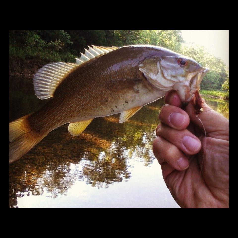 Buggin 39 out more smallmouth bass popping bugs for Bass fly fishing