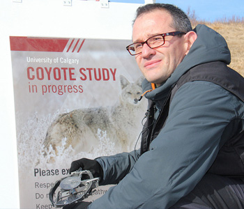 Wolves wolf facts cougars cougar facts coyotes coyote facts