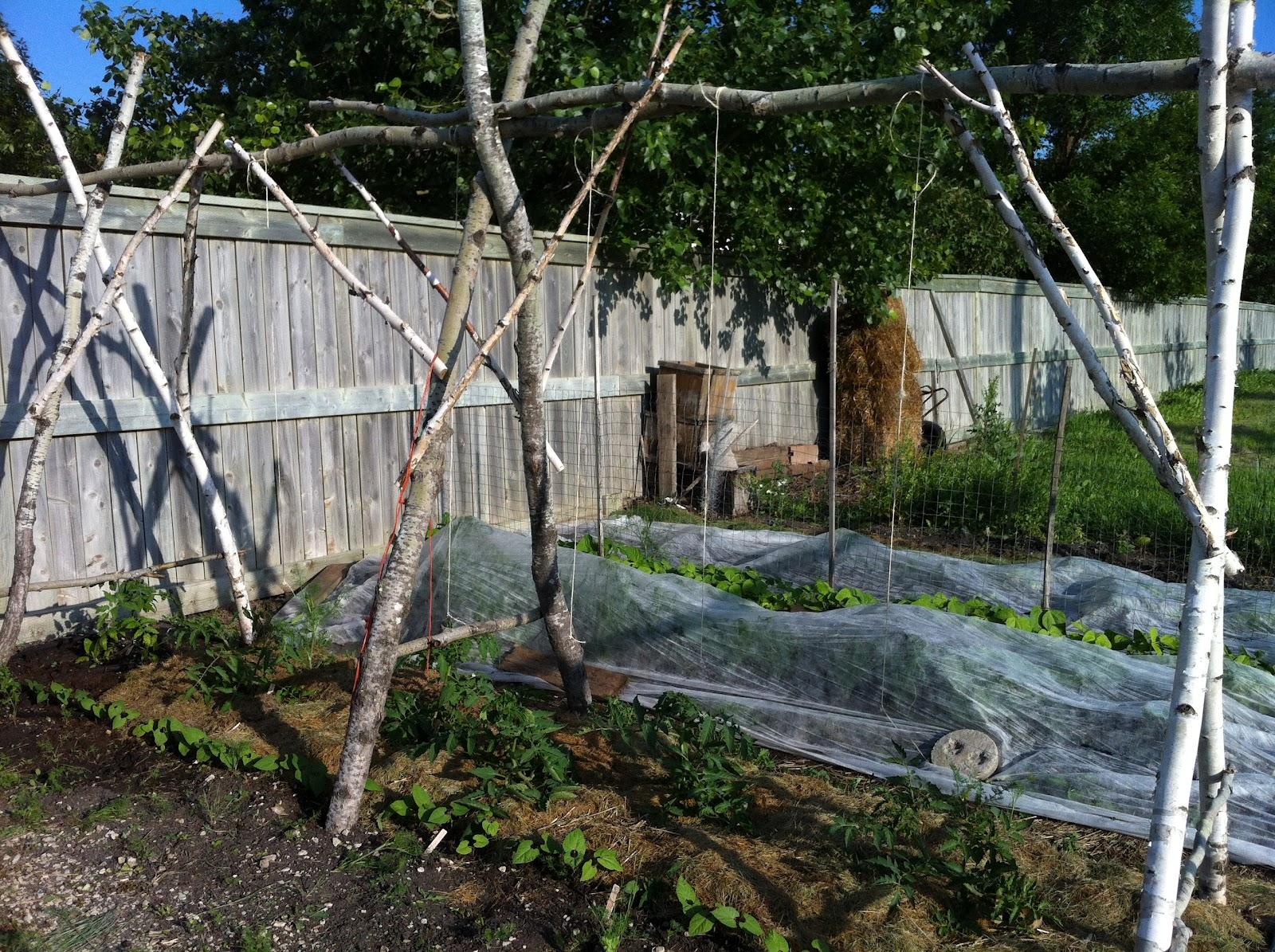 Trellis Options | A Manitoba Garden Diary