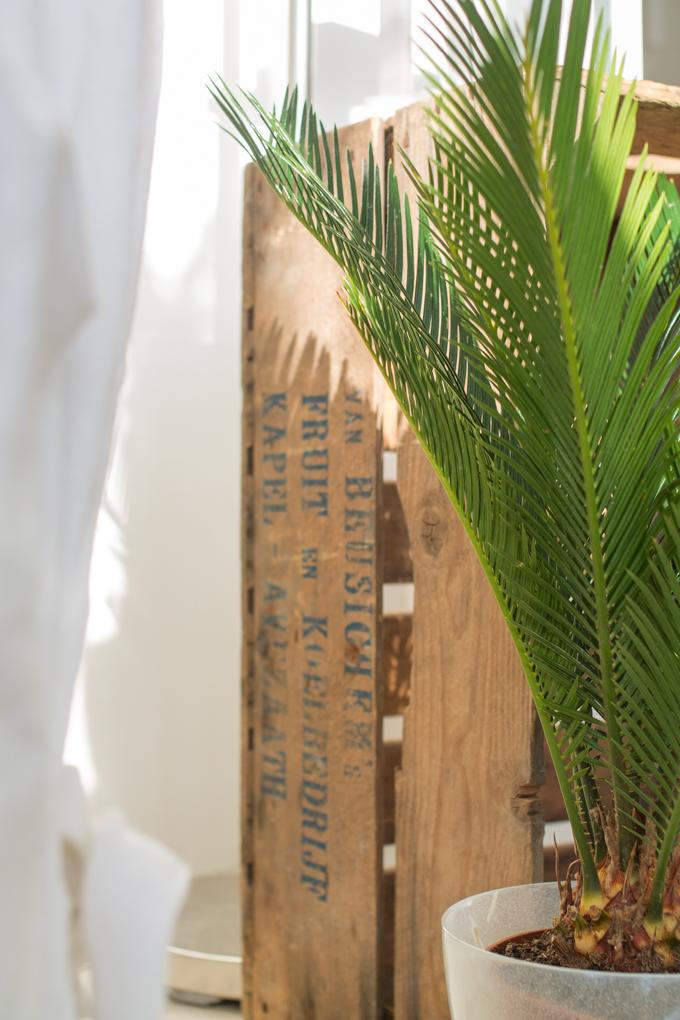 käpypalmu sisustus vihersisustus viherkasvit sisustuksessa