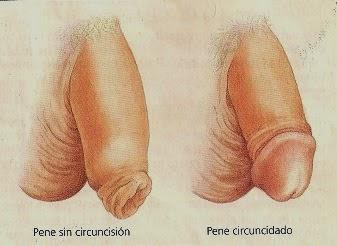 Fotos de pene masculino no circuncidado