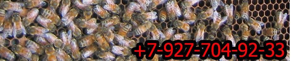 Восковая моль. Полезные свойства. Продукты пчеловодства : подмор, прополис, мед и др...