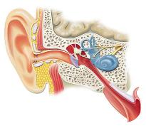 Remedii contra durerilor de gat, de urechi si de dinti
