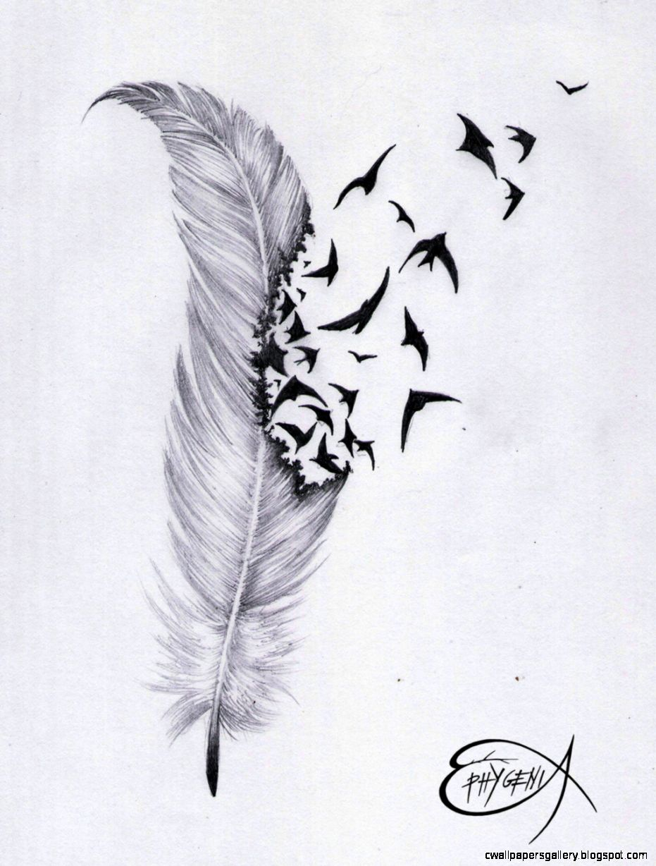 INK me on Pinterest  Feather Tattoos Illustration and Infinity