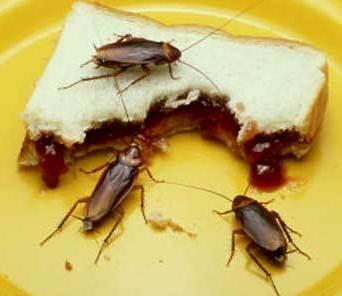 Cucarachas comiendo sandwich