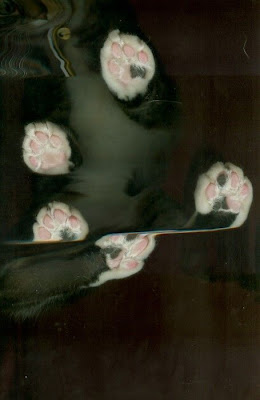 Cats Scanned Seen On www.coolpicturegallery.us