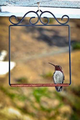Join swinging bird feeders prompt
