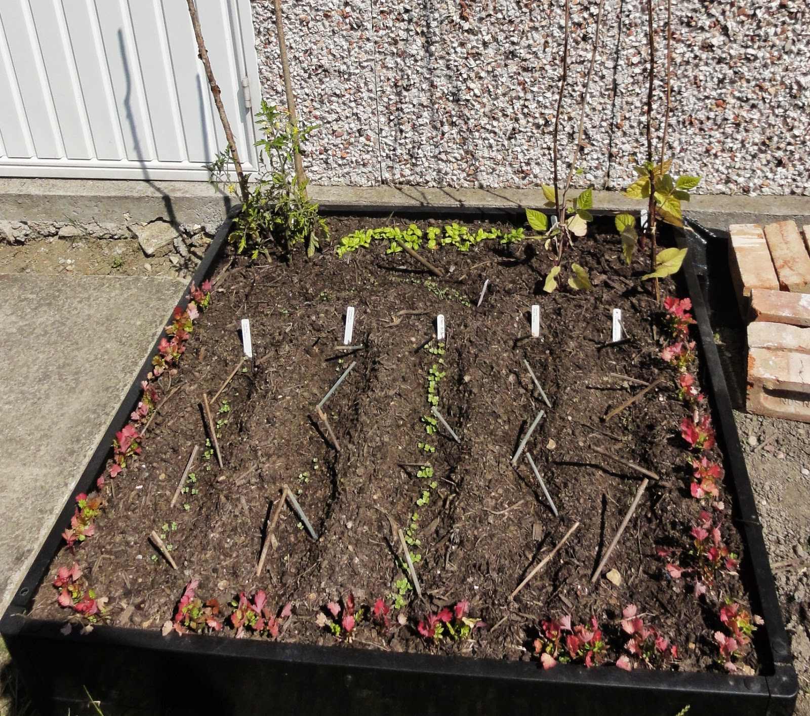 Gwenfar\'s Garden and other musings: Problem: growing vegetables on ...